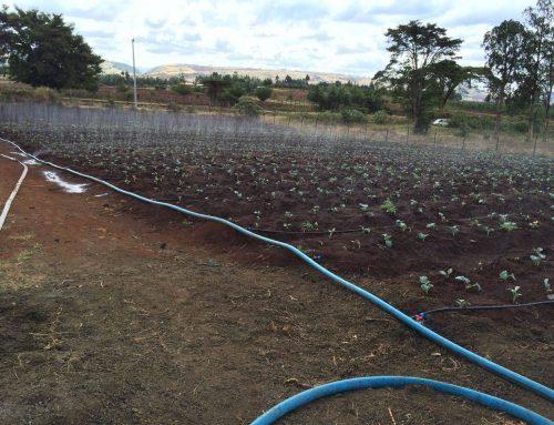 Landbouwproject Baraka